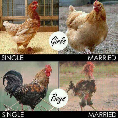vittigheder om mænd og kvinder