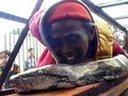 Kæmpe indonesisk slange